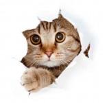 La magia del gato – teleamor